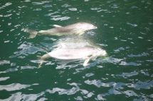 many encounters with dolphins